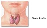 2000px-Thyroid_gland-fr.svg
